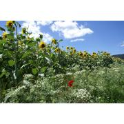 03_tuscan_plant.jpg