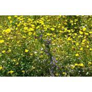 06_tuscan_plant.jpg