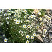 19_tuscan_plant.jpg