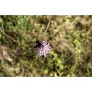 23_tuscan_plant.jpg