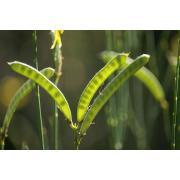 25_tuscan_plant.jpg