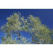 26_tuscan_plant.jpg