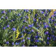 27_tuscan_plant.jpg