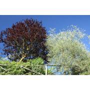 31_tuscan_plant.jpg