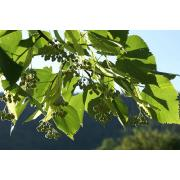 42_tuscan_plant.jpg